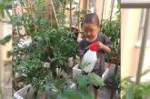 """Cina. Piccoli """"pollici verdi"""" crescono"""