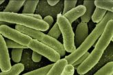 Verona. Il Citrobacter che ha ucciso quattro neonati si nascondeva nel rubinetto