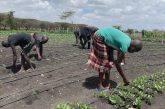 Kenya. Gli orti didattici del Vijiji Home of Light, il passatempo preferito durante la pandemia