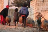 Siria. 480 pecore per 120 donne capofamiglia: fra le tende di Idlib la speranza non si spegne