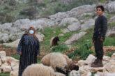 """Siria. """"Latte e formaggio!"""" La gioia di uno dei figli di Aziza mentre arrivano le quattro pecore destinate alla sua famiglia"""