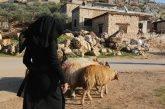 Siria. Hanadi, 24 anni e 4 figli: 9 pecore per ricominciare a vivere…
