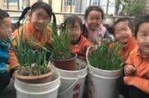 Cina. Casa di Accoglienza di Xi'An: queste piantine crescono proprio come noi...