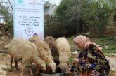 Siria. La nuova vita di Siham inizia da 4 pecore ricevute grazie ad Ai.Bi.