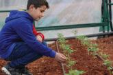 Siria. I giardini terapeutici di Ai.Bi. nelle scuole di Idlib: quando l'aiuto arriva dalla terra