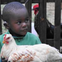 hens-african-child-chicken200